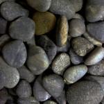 batu koral sikat hitam