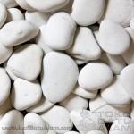 batu koral sikat putih